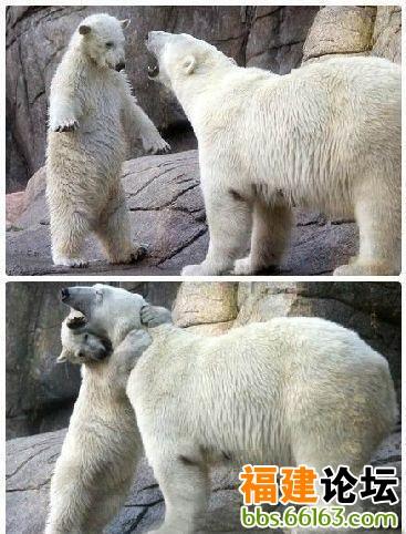 动物园工作人员说拥抱已经成了奥格讨妈妈欢心的老招数了.